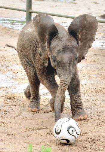 Die jeugdopleiding van Ajax in Afrika begint z'n vruchten af te werpen